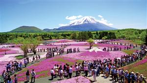 Mùa hoa anh đào nở rộ nhất vào tháng 4 tại Nhật Bản