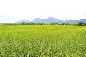 Cố đô Lampang- Ngôi sao mới của du lịch Thái lan