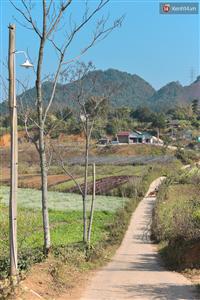 Du lịch Mộc Châu, Ngủ nhà Container giữa rừng hoa cải ngây ngất