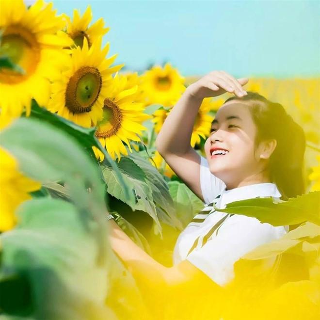 Hà Nội - Ngắm cánh đồng Hoa Hướng dương Diễn Châu