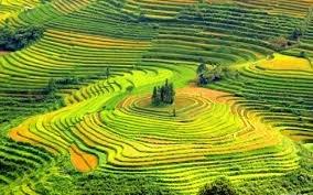 Hà Nội - Bắc Hà - Simacai - Bản Mễ - Cốc Ly - Sapa - Panxipang