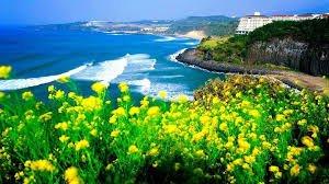 Vi vu Jeju Hàn Quốc- không cần Visa
